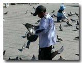 鳩にえさをやる少年