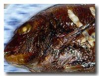 鯛のオーブン焼き アップ