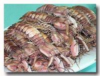 水煮蝦蛄 ゆでしゃこ