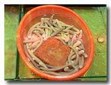 沙虫の原型