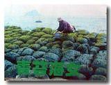 海苔を取る海女さんの写真