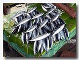 ケイ島の市場で売られていた魚 ぴちぴちで美味しそう