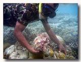 シャコ貝をとる男