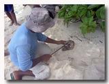 シャコ貝をさばくおじさん