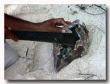 シャコ貝の貝柱を貝殻からはがす